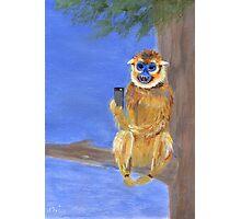 Sammy the Snub Nosed Golden Monkey Photographic Print
