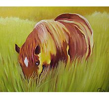 Horse eating in  tall grass. Photographic Print