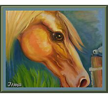 Curious horse Photographic Print