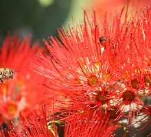 Bottle Brush Bee by barmat
