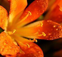 Orange Burst  by barmat