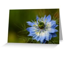 Love in the Mist Greeting Card