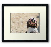 Penguin Relaxation. Framed Print