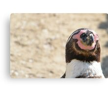 Penguin Relaxation. Canvas Print