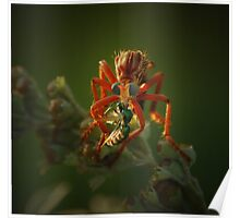 Sci-Fi Robber Fly Poster
