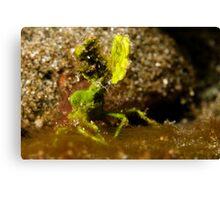 Underwater green leaf monster Canvas Print