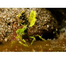 Underwater green leaf monster Photographic Print