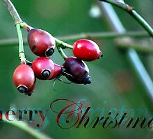 Berries Christmas Card by babibell