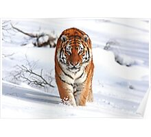 A Tiger in the Snow Poster