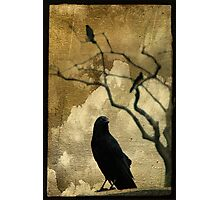The Crow Is King Photographic Print