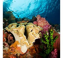 Reef Colours Photographic Print