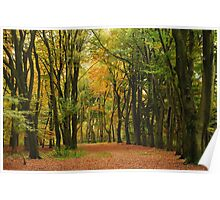 A beech-tree lane in the autumnal paradise  Poster