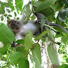 Long-tailed Macaque by Mike Paget