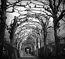 Avenue walk by Christopher  Rees