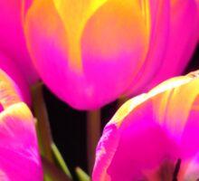 Colours Tulips Sticker