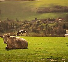 Lush Green Pastures by Nigel Finn