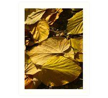 Autumn foliage. Art Print