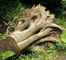 Huge trunk. by demigod