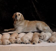 ten puppies 2 by imageworld
