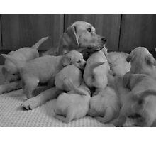 ten puppies3 Photographic Print