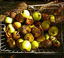 Rotten autumn apples. by demigod