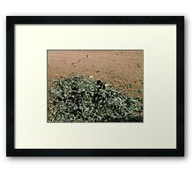 Boys are born from cabbages, aren't they ? Framed Print