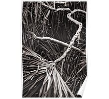 Pandanus abstract Poster
