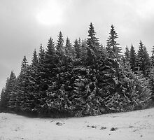 Winter fir trees. by demigod