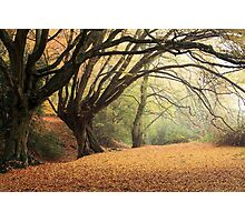 Autumn Spirit Photographic Print