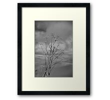 Once I was Tall and Worshipped the Light Framed Print