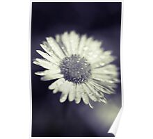 I heart daisies Poster