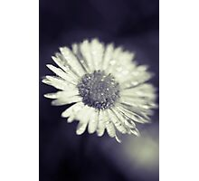 I heart daisies Photographic Print