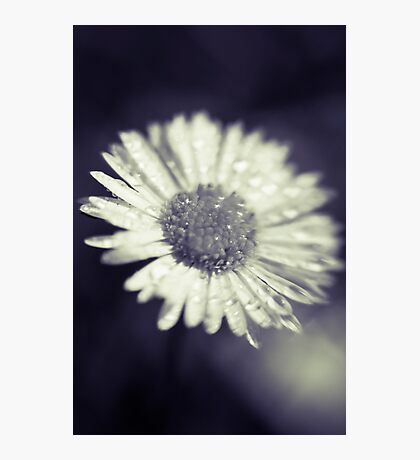 I heart daisies Photographic Print