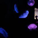 Humanarium or Aquarium...? by Paul Moore