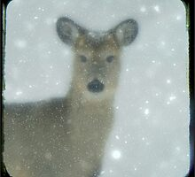 Snow Deer by gothicolors