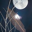 Feather and Moon by linmarie