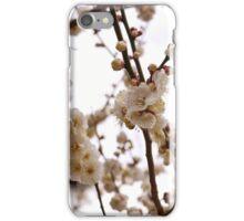 Pretty Plum Blossom iPhone Case/Skin