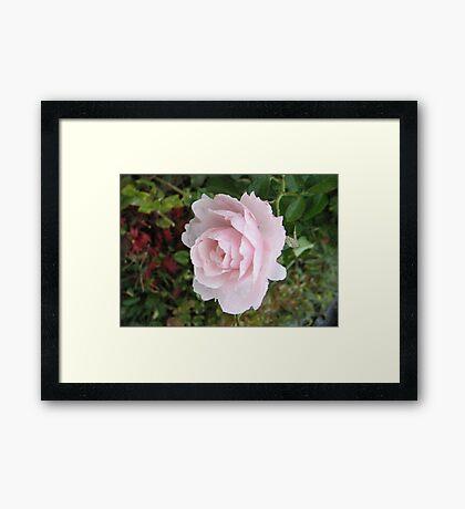 Isolated Beauty Framed Print