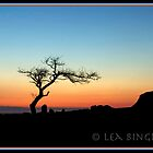 sunset tree by leabrigitte69
