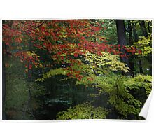 Autumn Leaf Canopy Poster