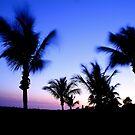 2009 Sanibel Sunset 250 by greg1701