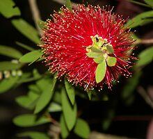 Pollen Bonanza by Bob Hardy