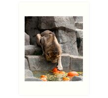 Bobbing For Pumpkins Art Print