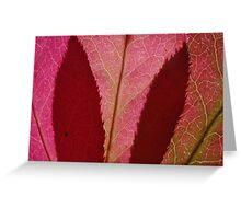 spindle tree leaves Greeting Card