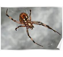 Busy Spider Poster
