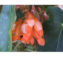 Orange Blossom Photographic Print