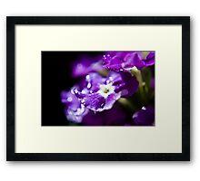 Purple Raindropped Petals Framed Print