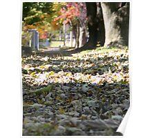 Leafy Walk Poster
