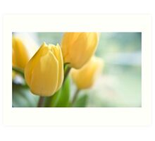 Yellow Tulips. Art Print