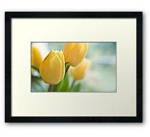 Yellow Tulips. Framed Print